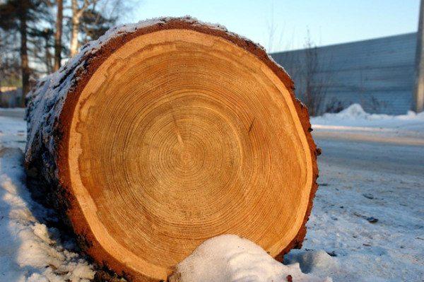 Боровая древесина
