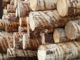 Свежесрубленная древесина, которая скоро станет брусом
