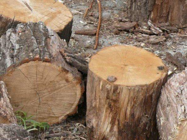 Береговой вид древесины