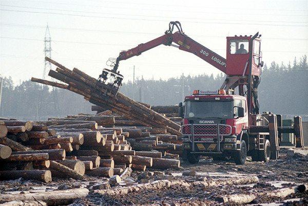Добыча древесины