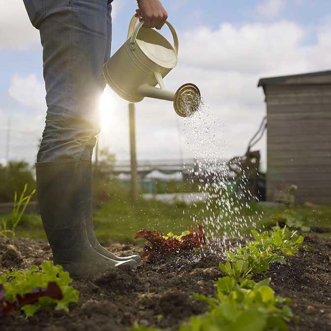 Обильный, но редкий полив залог хорошего растения