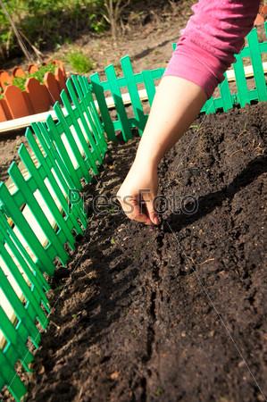 Посадка одной и той же культуры на одну и ту же грядку истощает почву