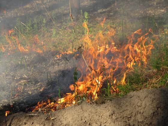 Сжигая сухую траву на грядках, мы делаем почву не плодотворной