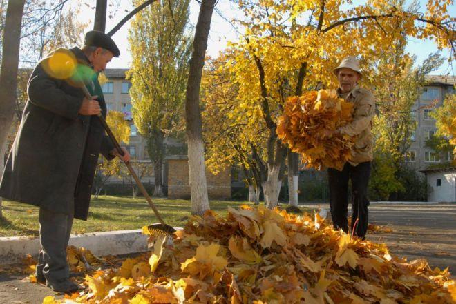 Природа каждый год готовится к зиме и деревья сбрасывают листву.