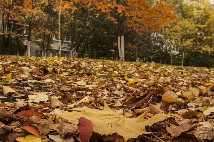 Стоит ли оставлять листья под деревьями – выбор каждого.